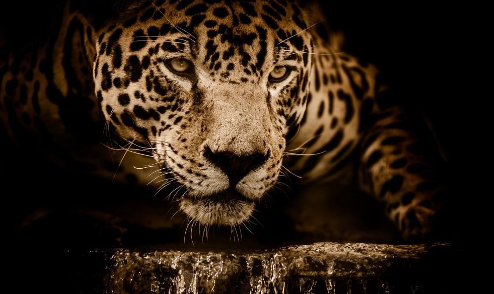 En busca del Jaguar en Guatemala