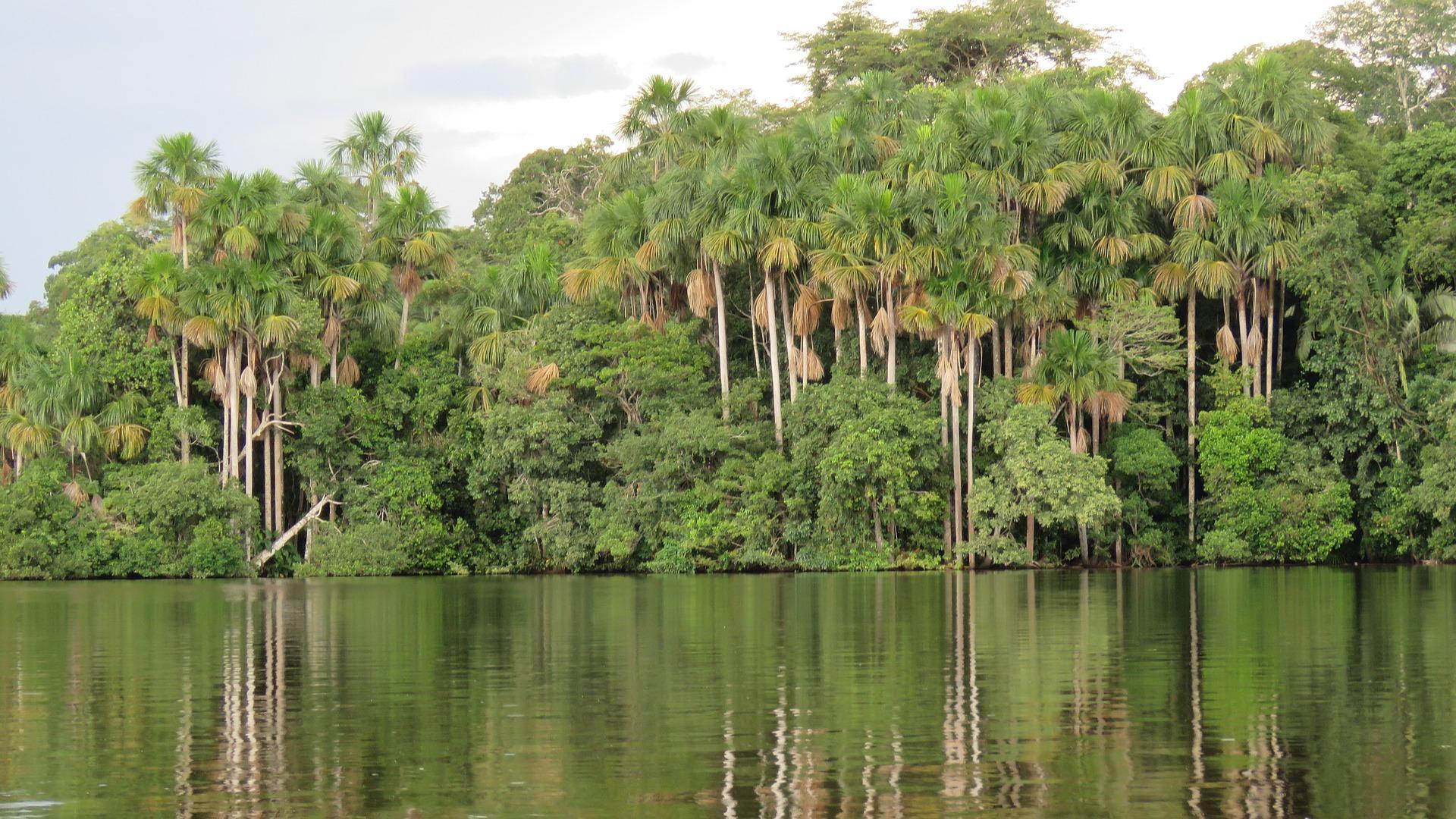 10 Recomendaciones para ir a la Selva