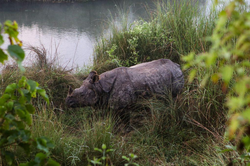 rinoceronte en el Bardia National Park