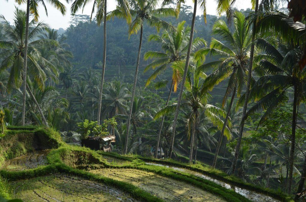 arrozales tegalallang